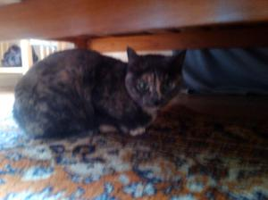 This is Nina from Bay Ridge. Yes, the photo is fuzzy, but what is clear is that I am much better looking.