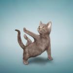 yoga_cats_1