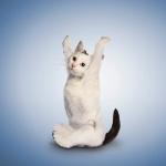 yoga_cats_3